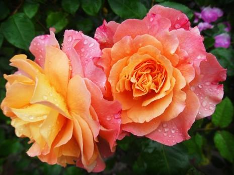 تفسير حلم رؤية الأزهار ورد زهور قطف الزهرة في المنام