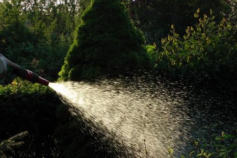 تفسير حلم رؤية سقي أو رش الزرع بالماء في المنام لابن سيرين