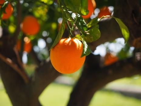 رؤية البرتقال في المنام