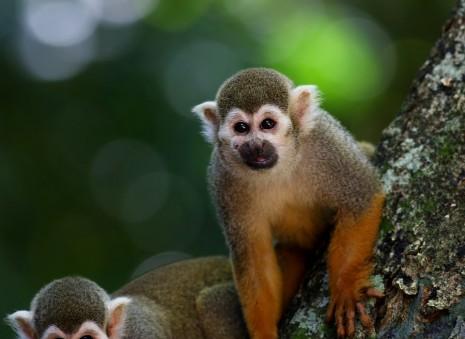 رؤية القرد في المنام1
