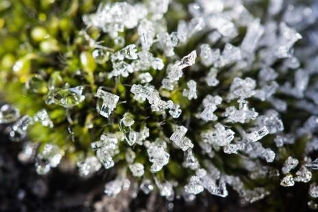 فوائد تناول السكر الفضي أو سكر النبات