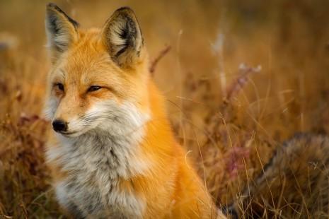 سماع صوت الحيوانات في الحلم
