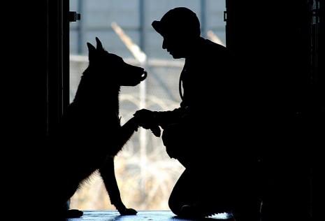 الكلب يتكلم أو يتحدث مع شخص في المنام