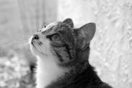 رؤية قطط كثيرة في الحلم و المنام لابن سيرين