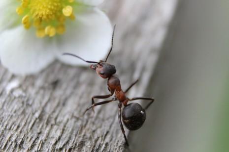 رؤية النمل الاسود أو الاحمر في المنام