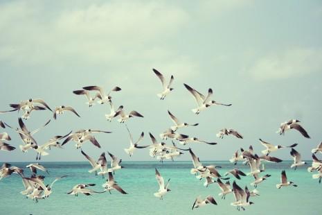 رؤية الطيور أو الطير أو الطائر في المنام