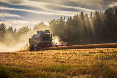 تفسير حلم رؤية حصاد المحصول أو الزرع في المنام لابن سيرين