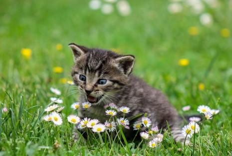 عضة القط أو القطة في المنام