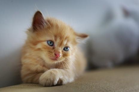 عضة القط أو القطة في الحلم