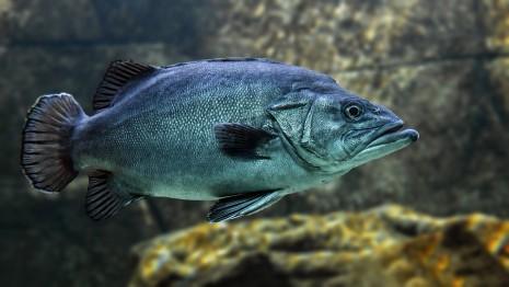 رؤية السمك في منام المرأة المتزوجة