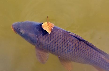 رؤية السمك في حلم المرأة المتزوجة