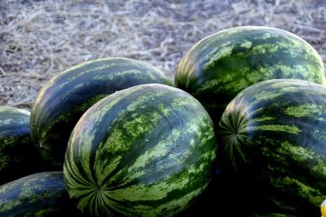 رؤية البطيخ في المنام لابن سيرين